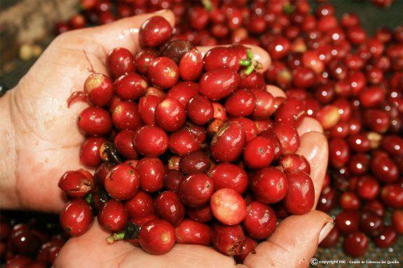Exportaciones de café de Colombia caen 52% en mayo